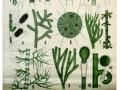 Grünalgen II Chlorophyceae